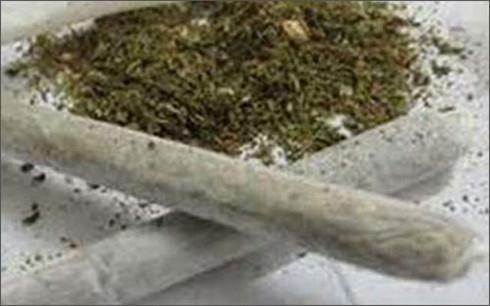 Quảng Ngãi tiêu huỷ gần 100 gói cỏ Mỹ